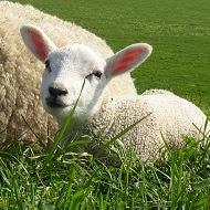 PMAF : protégeons les animaux de ferme !