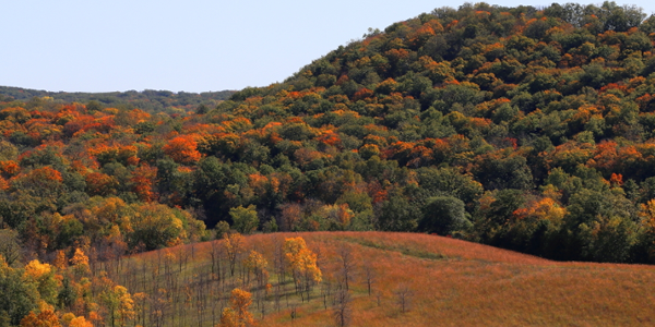 Hill at Maplewood State Park filled with colorful fall trees