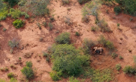 Elephants killed by poachers in Tsavo East national park