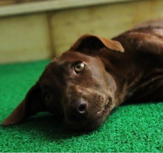 Spoiler Alert: Het verhaal van deze pup heeft een gelukkige afloop