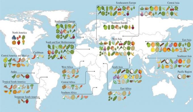 Cultibo de alimentos en el mundo