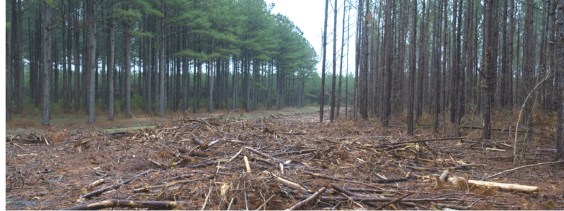 Fight environmental racism that destroys forests to produce pallets that create pollution and cause flooding.