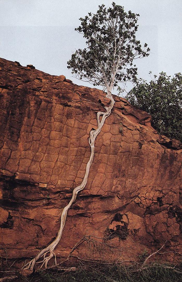 Сумело подняться дерево, живучесть, жизнь, мир, планета, растительность, фото