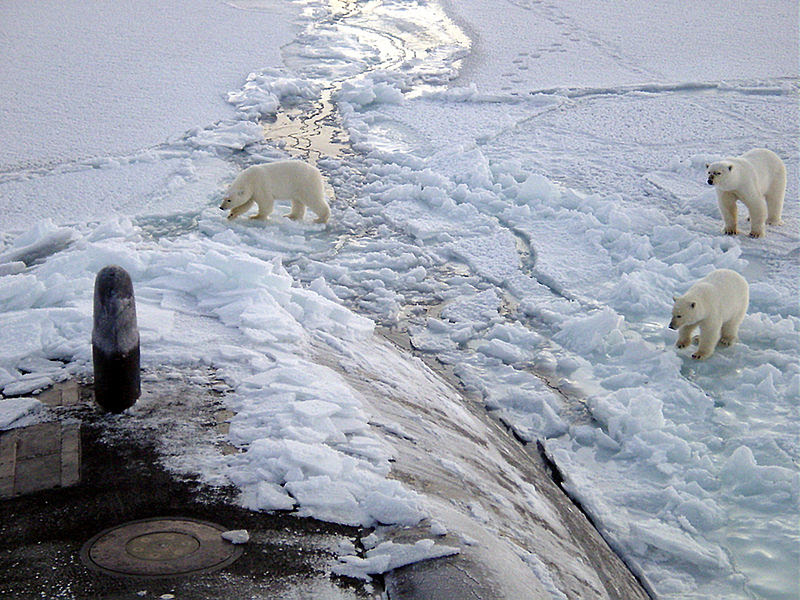 File:Polar bears near north pole.jpg