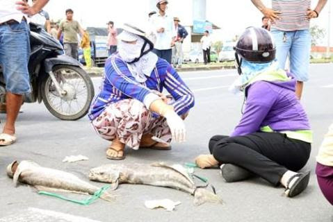 Người dân mang xác cá chết đổ ra quốc lộ, đường đi Vũng Tàu tắc nghẽn - ảnh 8