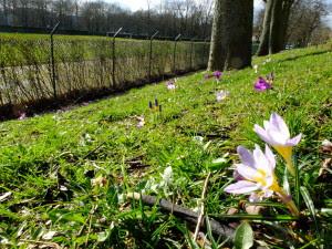 Le printemps est déjà là...