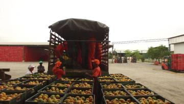 Unstuck: la iniciativa que busca integrar a los  migrantes venezolanos en la agroindustria peruana