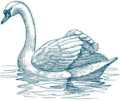 Image result for the swan
