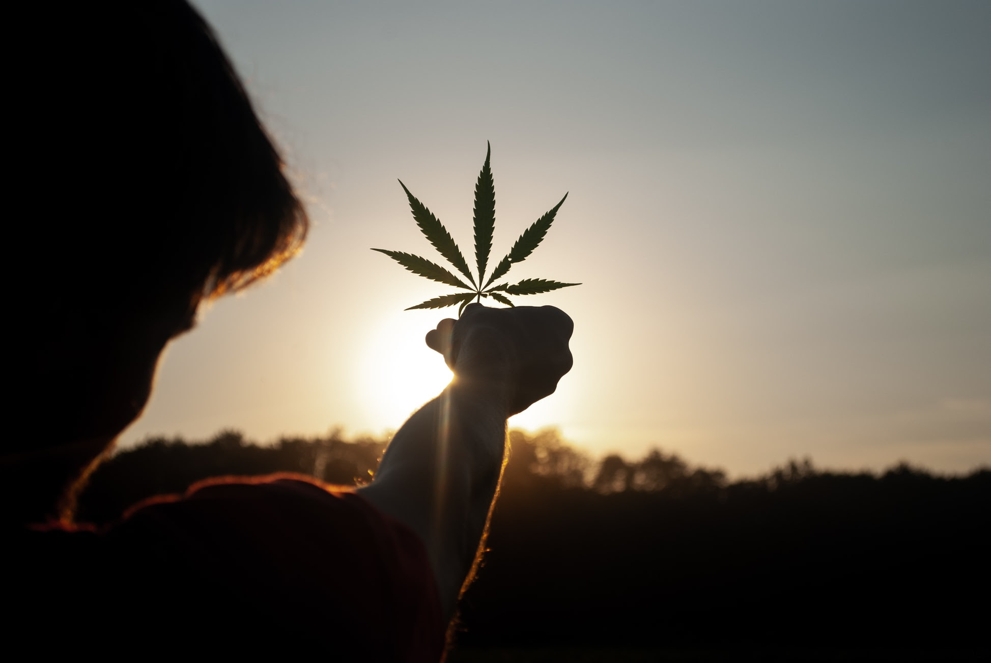 NARCO-POLITIK: 'The Cannabis Conspiracy', The Police State Marches On Unsplash-Cannabis-Leaf-1