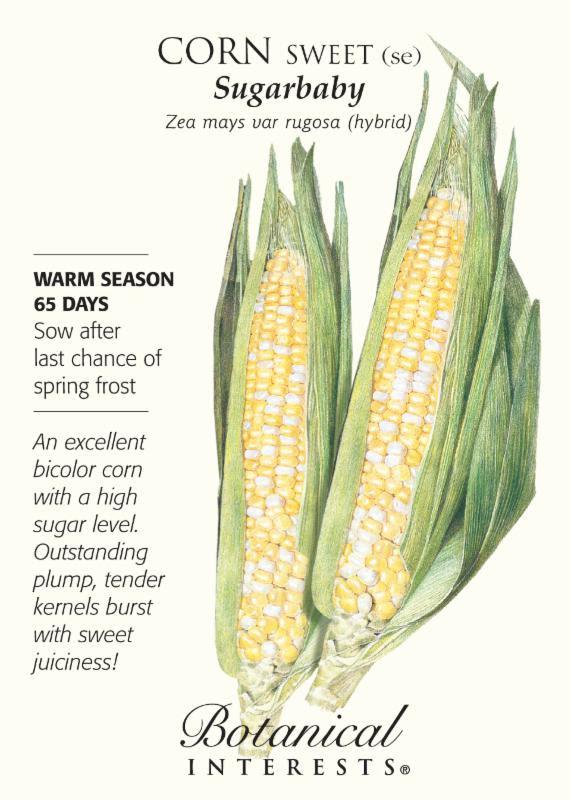 Corn Sugar Baby
