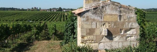 Dans certains vignobles, l'hectare de vigne peut dépasser le million d'euros à la vente