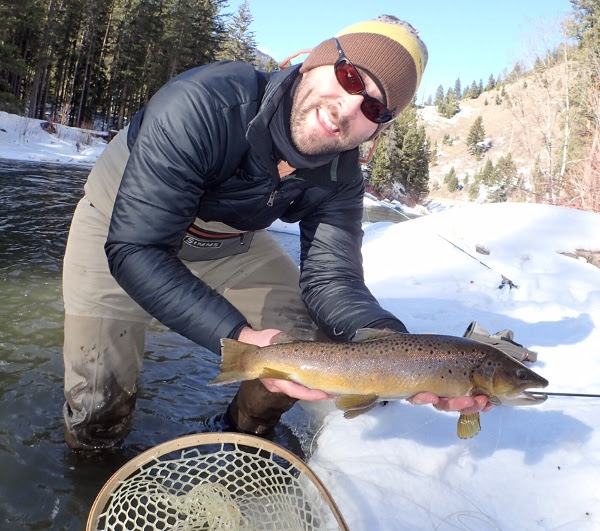 Gallatin River Winter Brown Trout