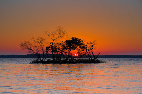 A small island of short trees rises out of the water under an orange sunset sky.