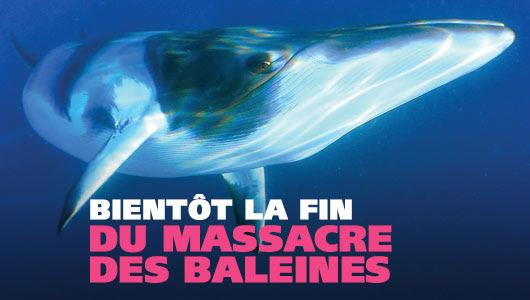 Bientôt la fin du massacre des baleines