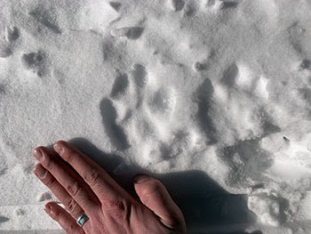 Tracks from a mountain line are shown in the snow in the Upper Peninsula.