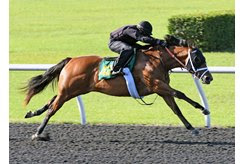 The Into Mischief filly consigned as Hip 429 breezes an eighth-mile in :09 3/5 during the OBS Spring Sale