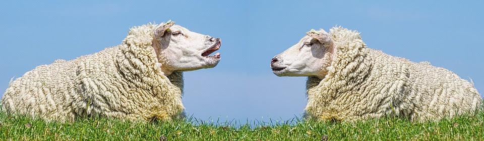 Lammas, Tiedonannon, Keskustella, Riita, Puhua, Röyhkeä