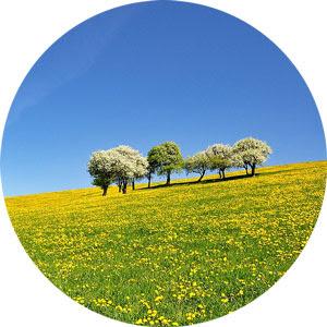 La primavera fa capolino: facciamo incetta di erbe spontanee