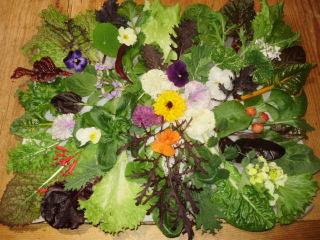 My New Year's Celebration Salad one example of each ingredient. This shows just how much you can grow even in winter!