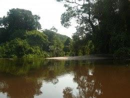 Tribunal nega recurso e segue proibida exploração madeireira na Floresta Nacional do Crepori (PA)