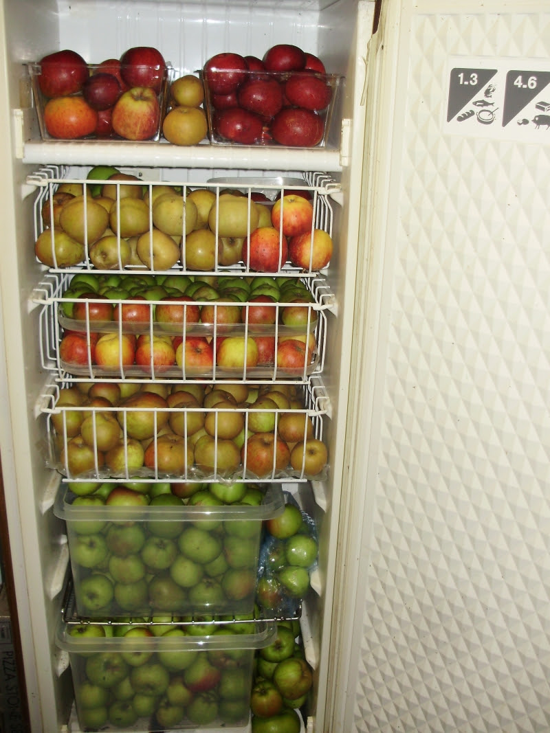 It's such a delight to pick out a daily treasure from among the  14 varieties in my recycled freezer 'apple store'