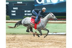 Gray Attempt works five furlongs under Channing Hill Feb. 10 at Oaklawn Park