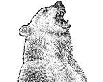 Markets Bear logo.