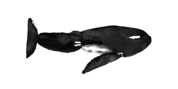 AWhaleOfAShow DonaldSultan Whale 628x315