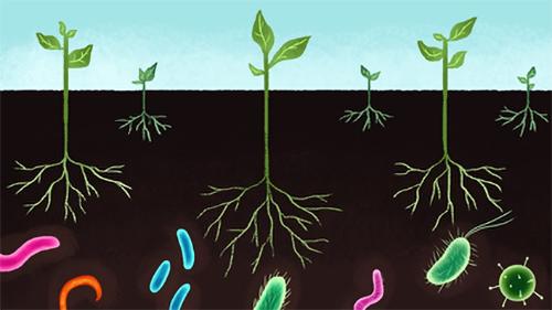 Talajban élő baktériumok