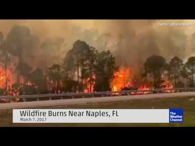 *Suspicious* Wildfire erupts in Naples Florida | Hot meteors hitting Earth?  Sddefault