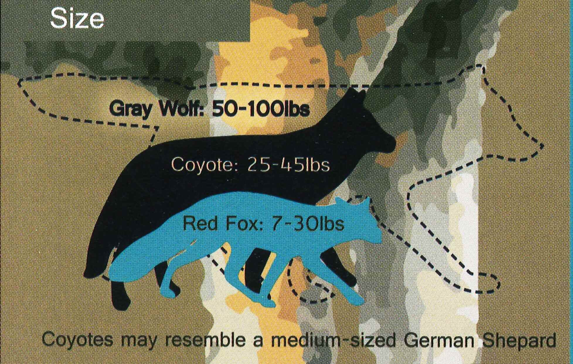 Coyote, fox, wolf size comparison chart.