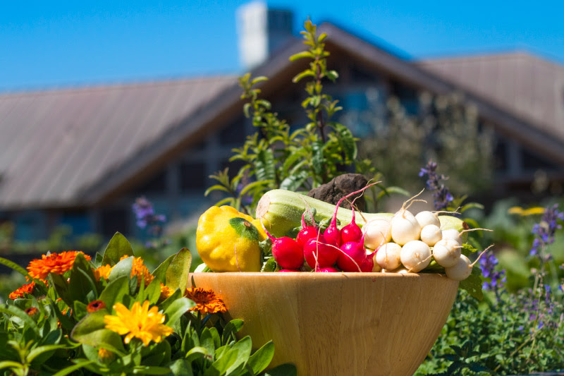 fresh garden produce graces the menu at The Inn at Newport Ranch north of Fort Bragg on the beautiful north coast in Mendocino County, California