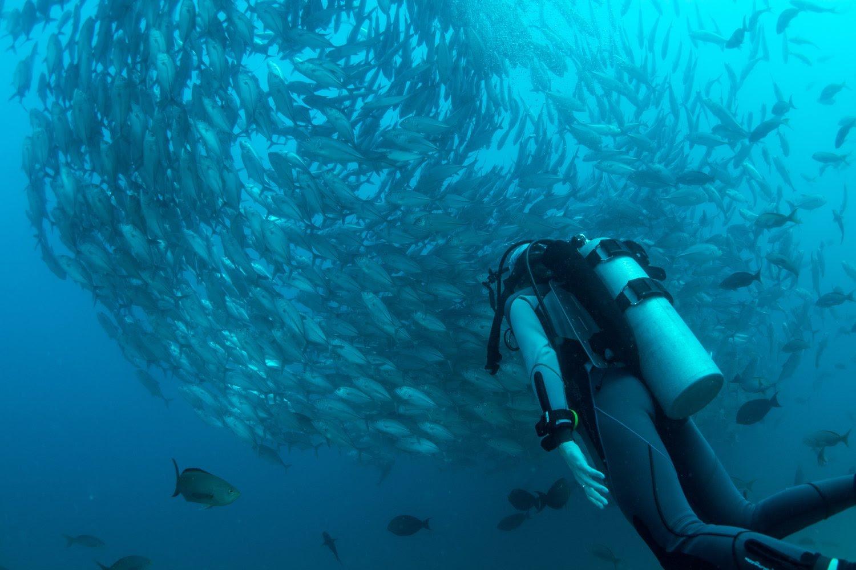 Diving Adventures in Liveaboard Holidays.