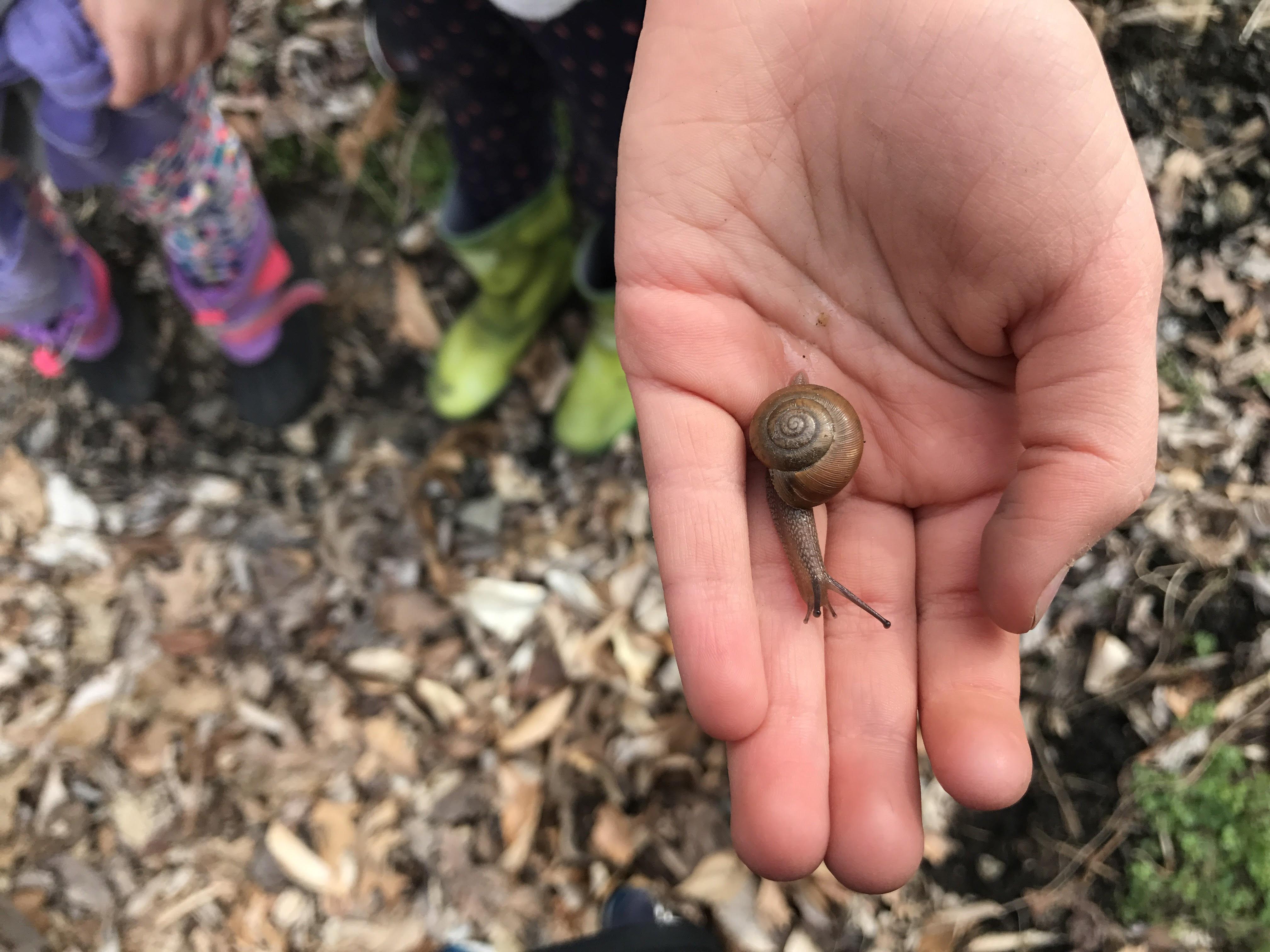 Snail_in_Hand.JPG