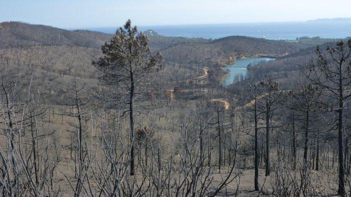 Les collines de Bormes après l'incendie de juillet 2017