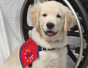 Patriot Service Puppy
