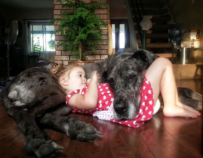 http://s.fishki.net/upload/post/201412/02/1339454/7172510-r3l8t8d-650-cute-big-dogs-and-babies-5.jpg