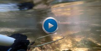 Electrofishing screen grab.