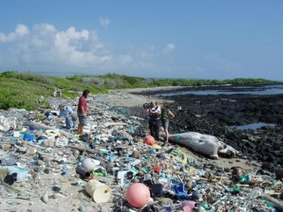 A view of plastic pollution on Kamilo Beach.  Photo courtesy of Algalita.org
