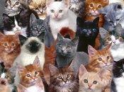 Si tus amigos dicen que eres el loco o la loca de los gatos, entonces esta trivia es para ti.