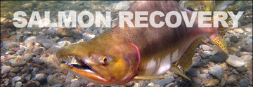 Salmon Recovery