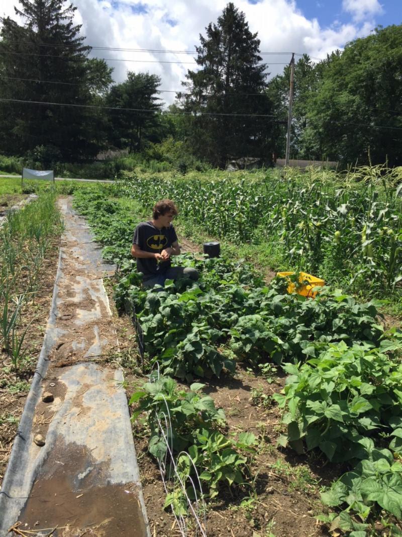 Kgk Gardening Landscape: Episcopal Community In Great