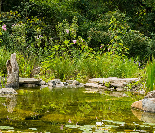 A pond with lily pads featuring water features for gardens.