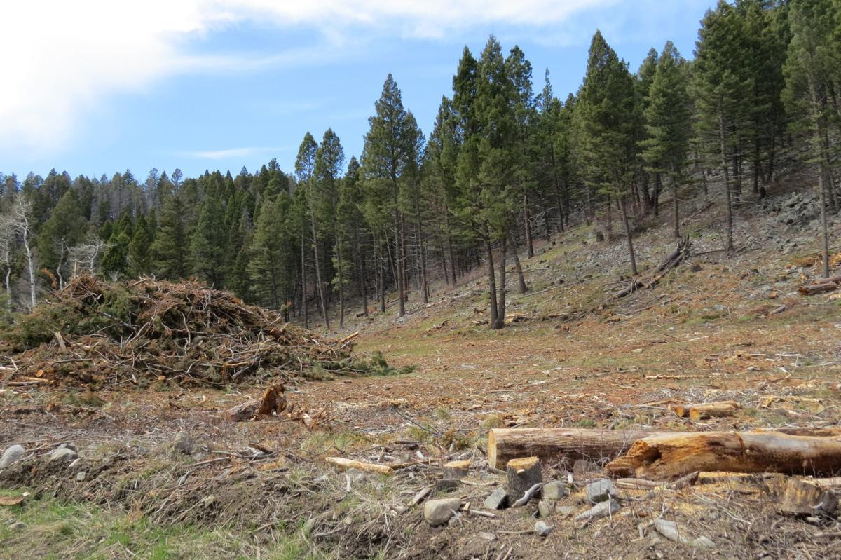 Ten Mile-South Helena Logging