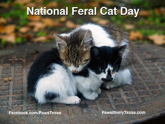 Image result for International Feral Cat Day Images