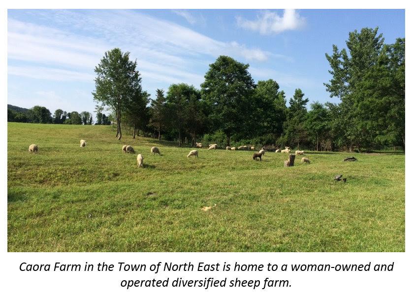 Caora Farm