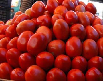 ¿Cuánto tomate produce el Perú en un año?