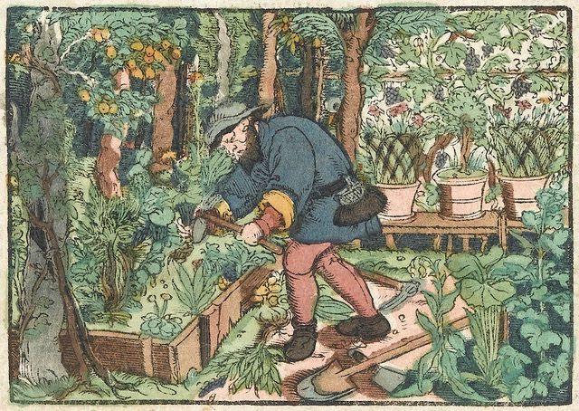 kreuterbuch, von natürlichem nutz, und gundtlichem gebrauch der kreuzotter, alemania 1550