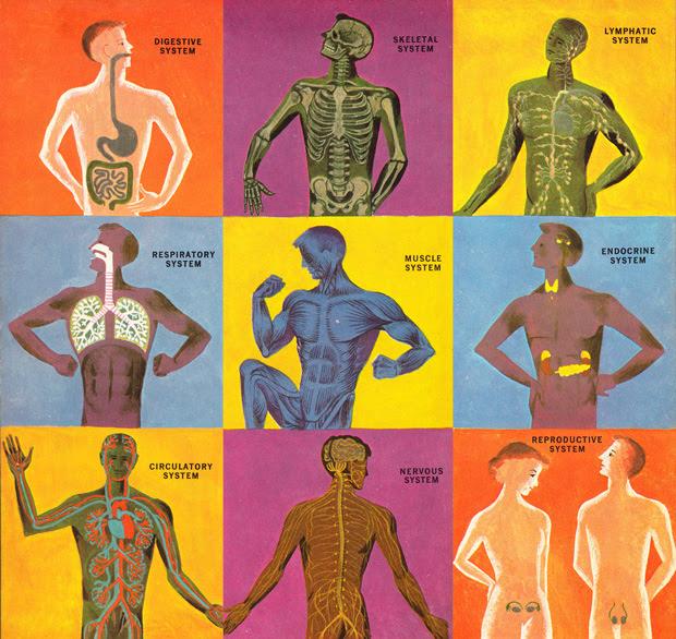 humanbody13.jpg