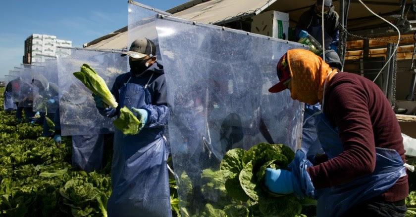 Trabajadores agricolas USA